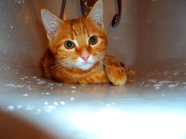 Horatio, chat Gouttière