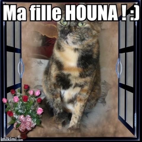 Houna, chat Européen