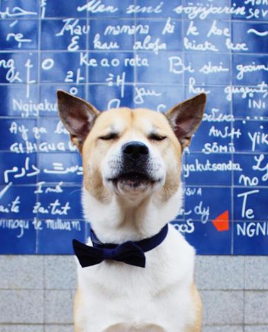 @blogofbruce, chien Husky sibérien