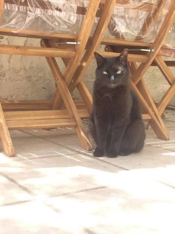 Iam, chat Gouttière