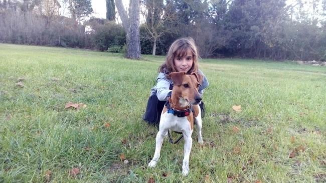 Iggy Pop, chien Jack Russell Terrier
