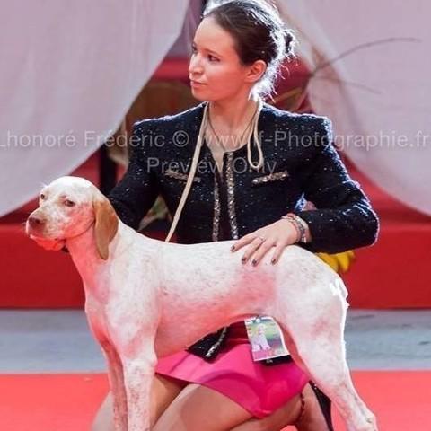 Irina Du Pech Du Cayrol, chien Braque du Bourbonnais
