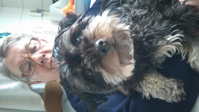 Iris Dit Pépette, chien Yorkshire Terrier