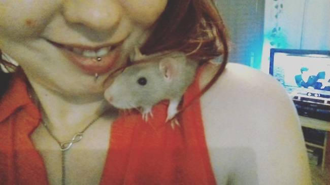 Isis, rongeur Rat