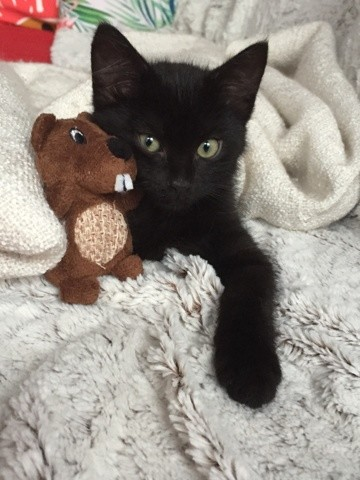 Jack, chaton