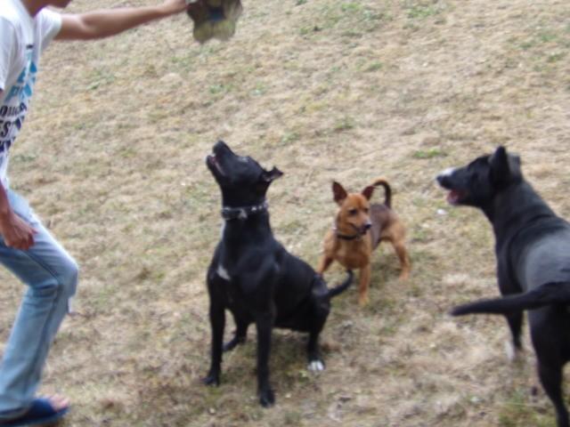 Diego, chien Jack Russell Terrier