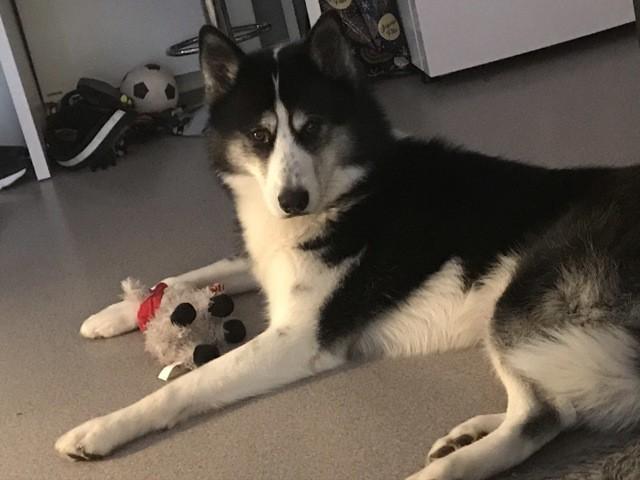 Jackson, chien