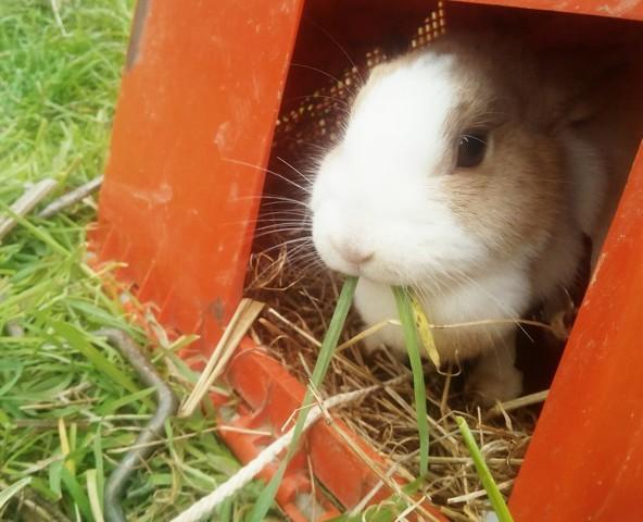 Judy, rongeur Lapin