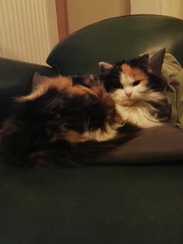 Juliette, chat Gouttière