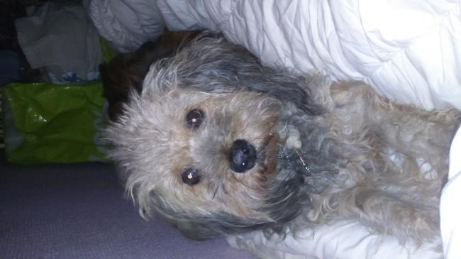 Juliette, chien