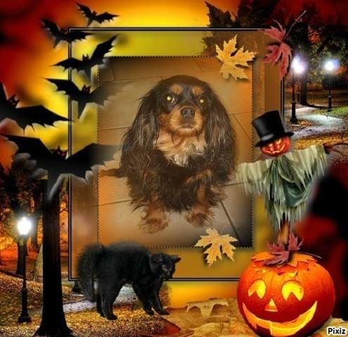 Jump Des Pipettechorizo, chien Cavalier King Charles Spaniel