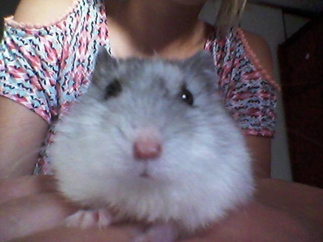 Jumper, rongeur Hamster