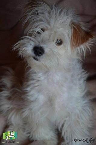 Juny, chien