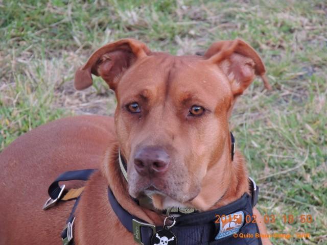 Kimo, chien