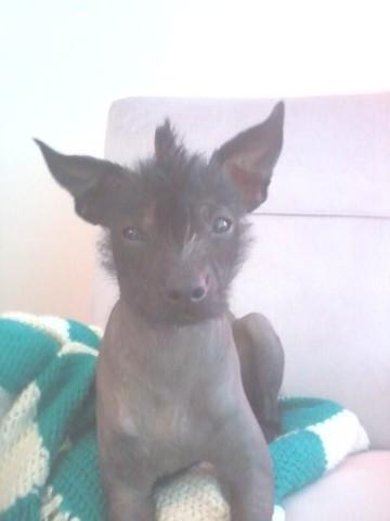 Kiss Me, chien Chien nu du Pérou
