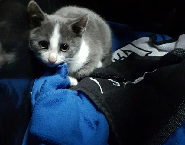 Kuro, chat Gouttière