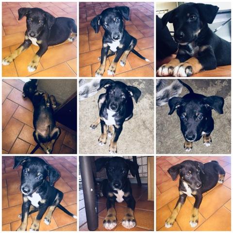 Kuzco, chien