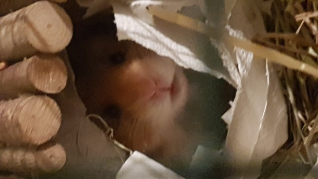Léo, Hamster