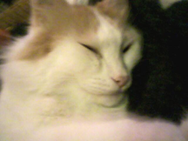 Larsene, chat