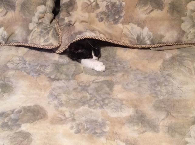Léa, chaton