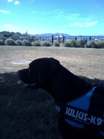 Lewis, chien