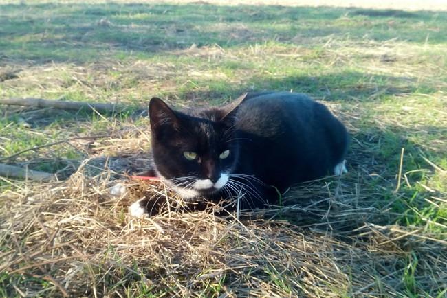 Lidia, chat Gouttière