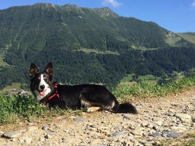 Linka, chien Border Collie