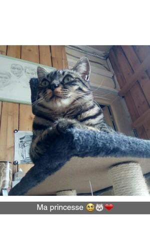 Litchi, chat Gouttière