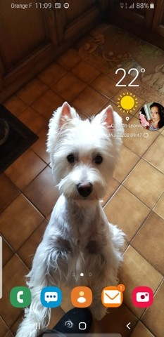Louky, chien West Highland White Terrier