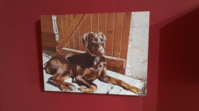 Louna, chien Dobermann