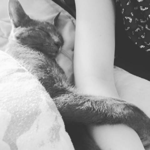 Loustic, chaton