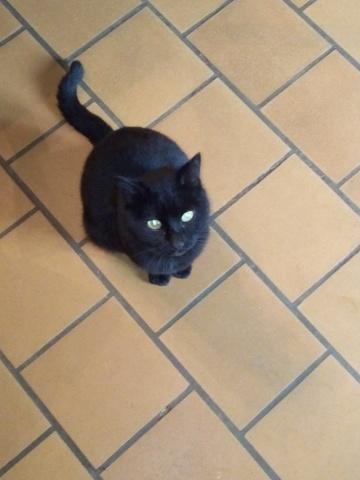 Lucifer, chat Gouttière