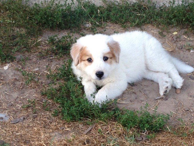 Maddy, chiot