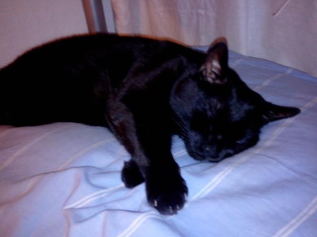Mahon, chat Gouttière