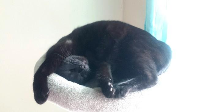 Mamamia, chat Européen