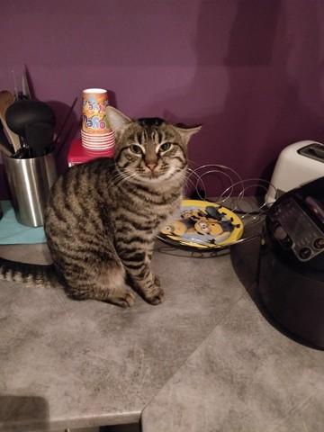 Marcus, chat Gouttière