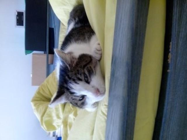 Matou, chat Gouttière