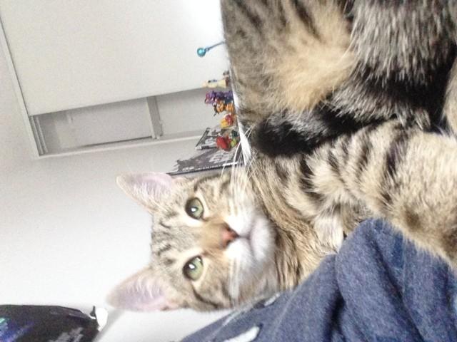 Maxoo, chaton Gouttière