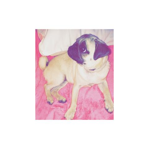 Mayla, chien Carlin