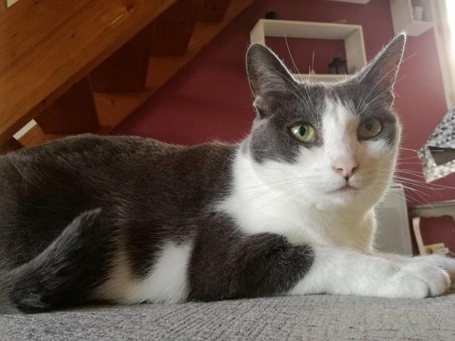 Meiko, chat Gouttière