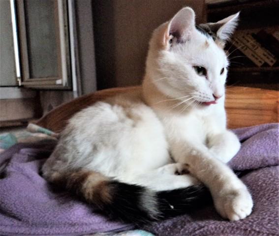 Melba, chat Gouttière