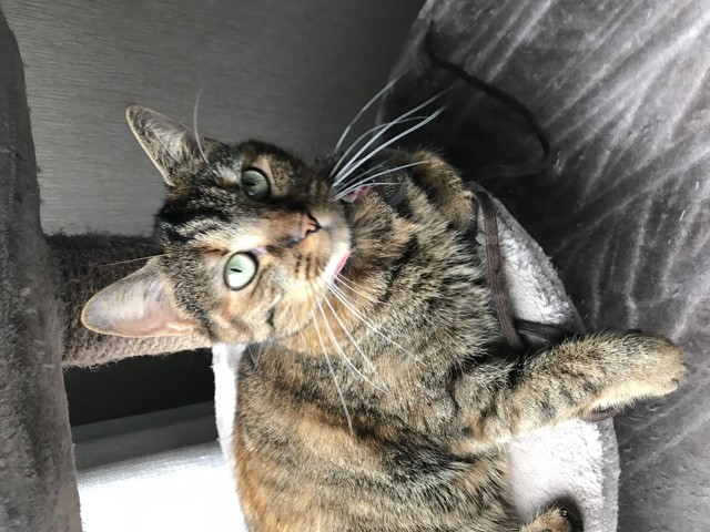 Meyou, chat Gouttière