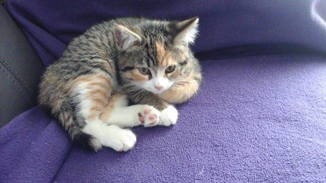 Mia, chaton