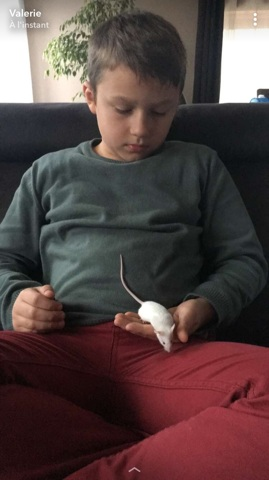 Mickey, rongeur Souris
