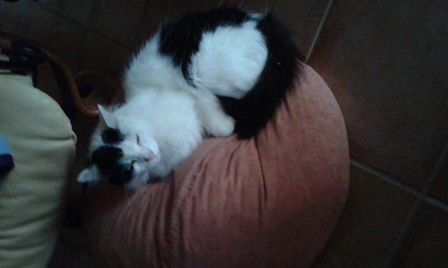 Mickey, chat Gouttière