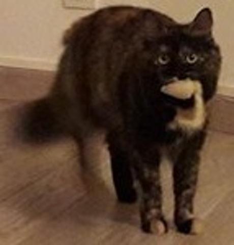 Midona, chaton Gouttière