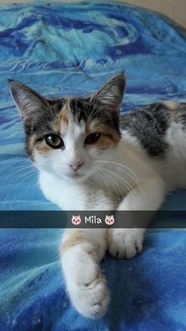 Mila, chaton