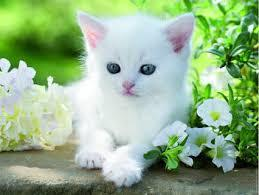 Mili, chaton