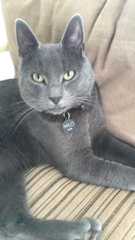 Milo, chat