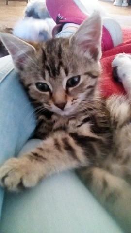 Milo, chaton